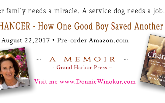 Chancer - How One Good Boy Saved Another